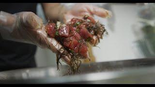 Hooked - Season 1 l Baron Miho l Honolulu Fish Buyer