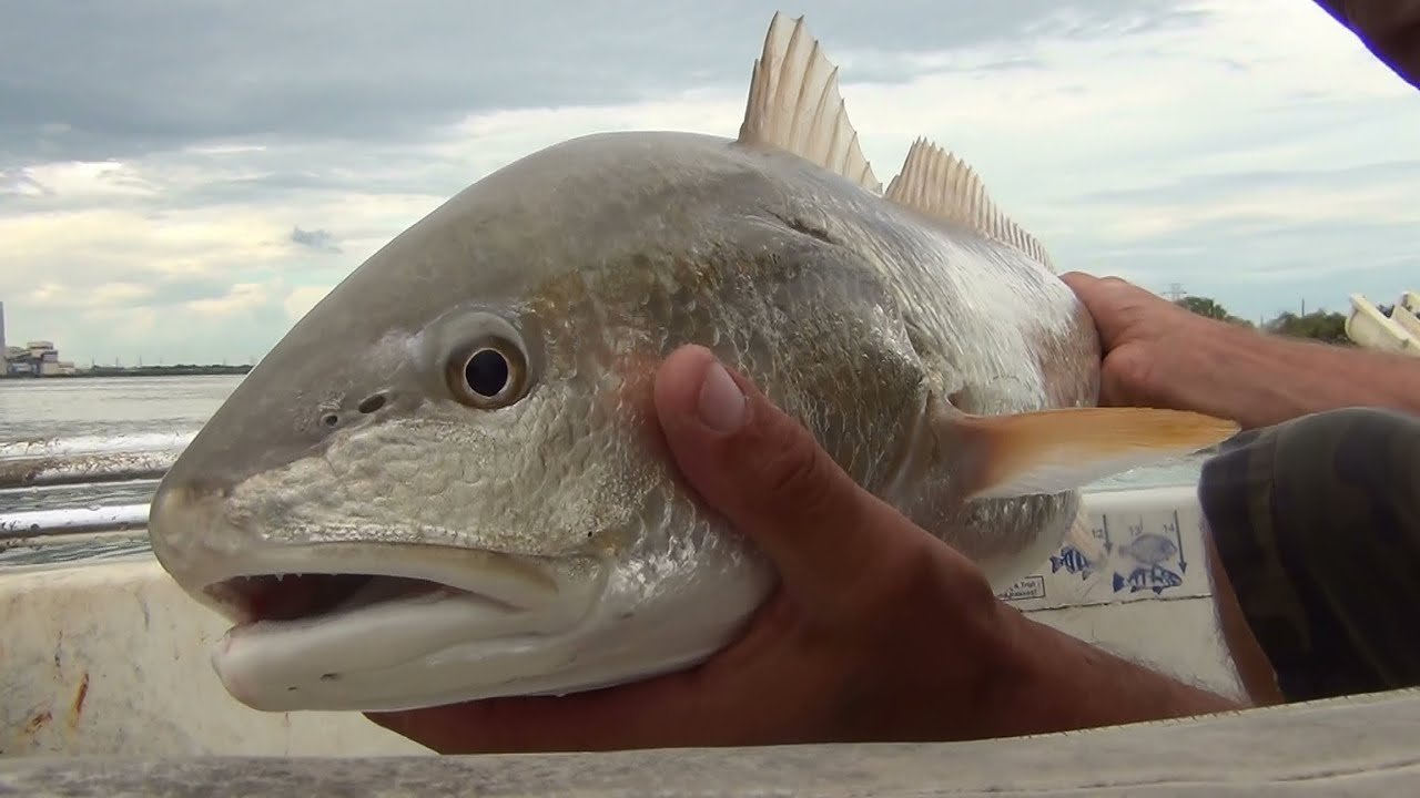 Calaveras lake redfish fishing the beach youtube for Calaveras lake fishing guides