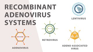 2) Cell Culture - Recombinant Adenovirus Expression System