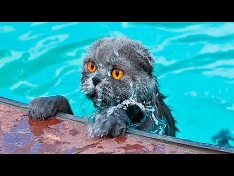 Cats Vs Water Part 4 - Cats Falling In Water - Funny Cats 2017 - Cats Hate Water