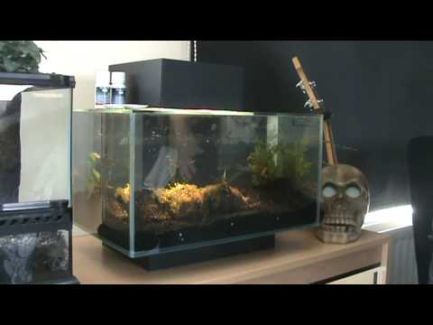 Edge 39 all in one 39 fish tank review youtube for Fish tank review