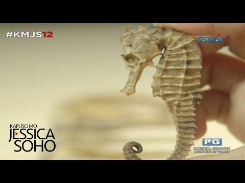 Kapuso Mo, Jessica Soho: Bentahan ng seahorse