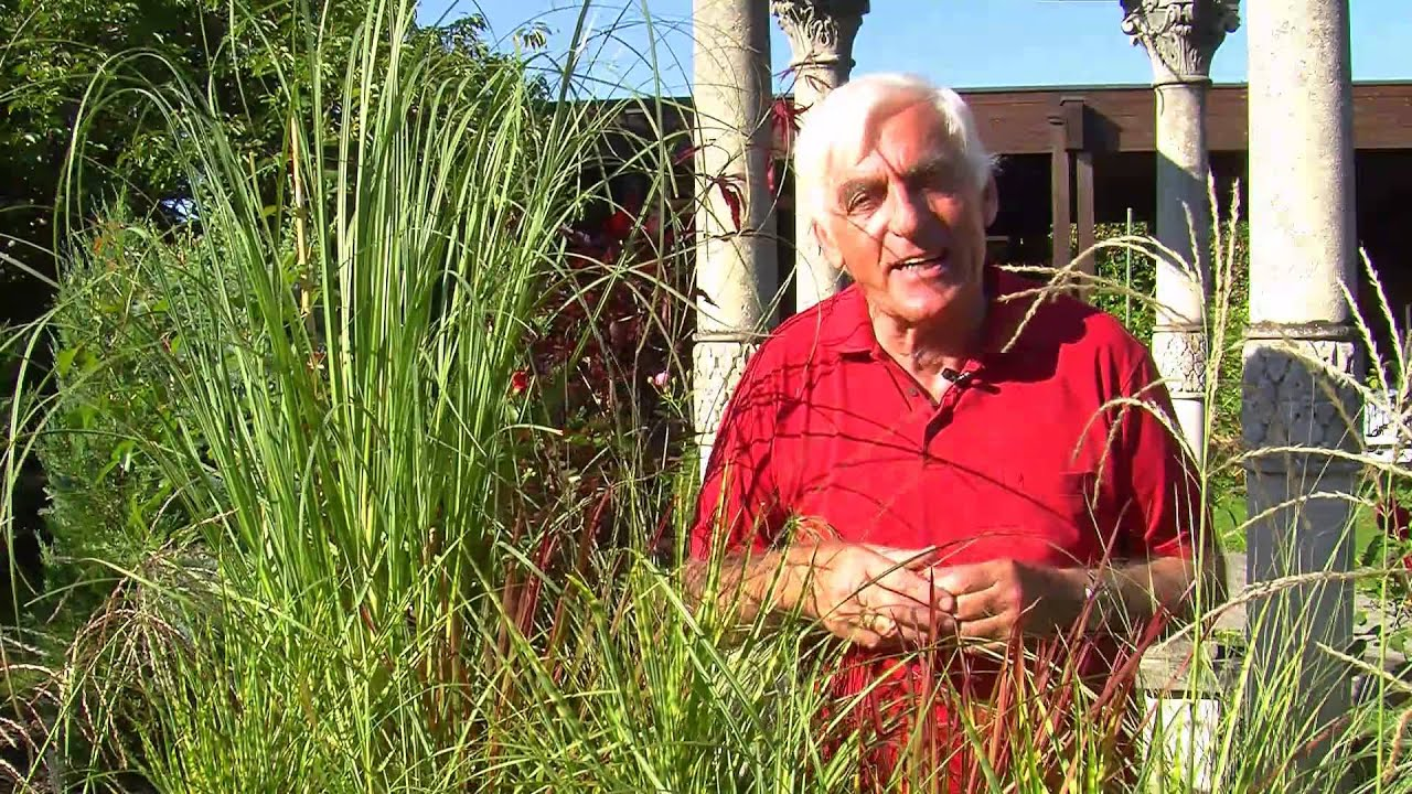 VOL AT Gartentipp Gräser für Garten und Balkon YouTube ~ 30062421_Kleiner Liegestuhl Für Balkon