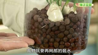 種子盆栽DIY教學 - 礫耕法