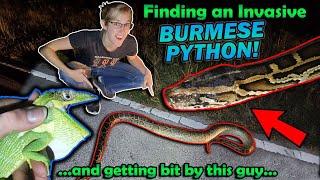 Finding INVASIVE Reptiles In Florida!