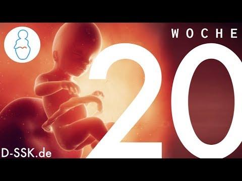 20. SSW / 20. Schwangerschaftswoche ✪ D-SSK.de