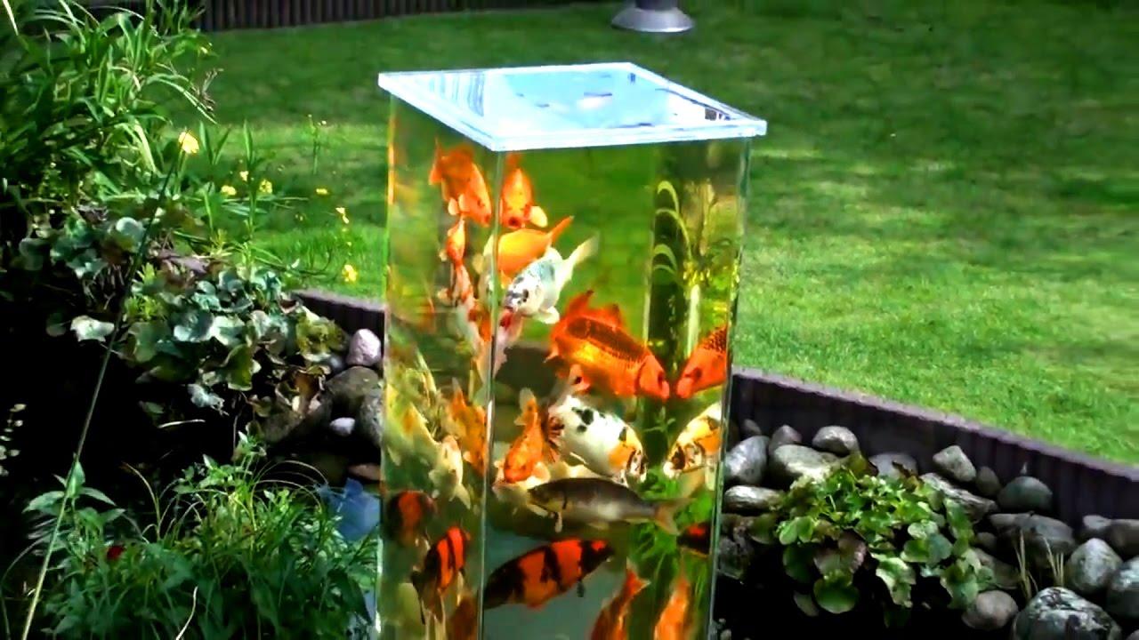 Koi Fish Pond Plants