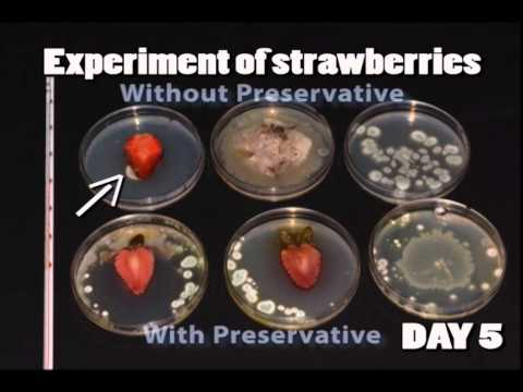 Food preservation - A brief introduction