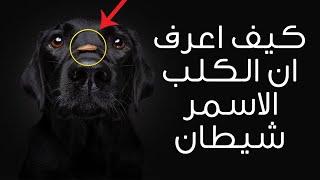 كيف اعرف ان الكلب الاسود شيطان؟ ولماذا امر الرسول بقـ تل الاسود منها