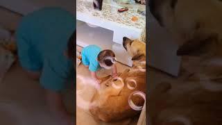 Собака укусила ребнка😭