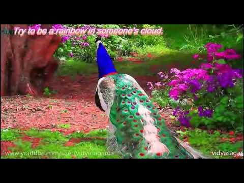 Bansi wale Ke Charno Mein Sar Ho Mera