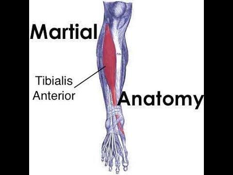 Martial Anatomy 1 Attacks On The Tibialis Anterior Youtube
