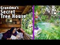Grandma Ordered to Destroy her Secret Miami Tree House, But She Won't!