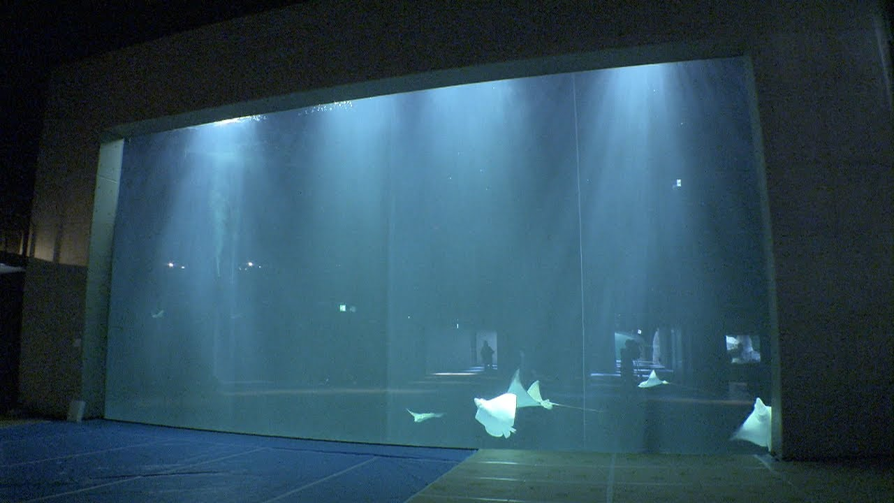大人 の 水族館 香川