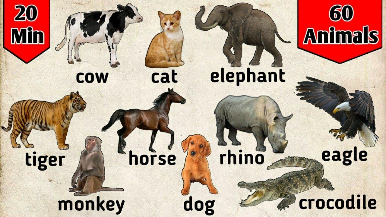 Download Belajar bahasa Inggris | Nama binatang dalam bahasa Inggris | animals for kids