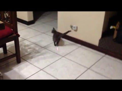 Dizzy cat vine
