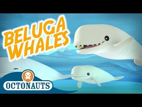 Octonauts - Beluga Whales | Full Episode | Cartoons For Kids