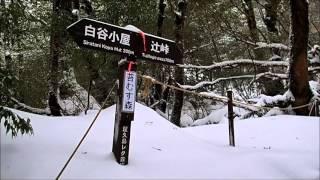 屋久島ガイド ~島あそび~ ホームページ http://www.yakushima-asobi.com/