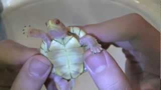Top 5 Rarest Turtles