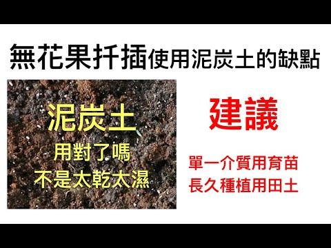 無花果扦插使用泥炭土的缺點l不建議使用單一介質如:泥炭土、水草、椰纖、赤玉土作為長久栽培介質,最好的方式是等開根穩定後,即用富有有機質的田土種植