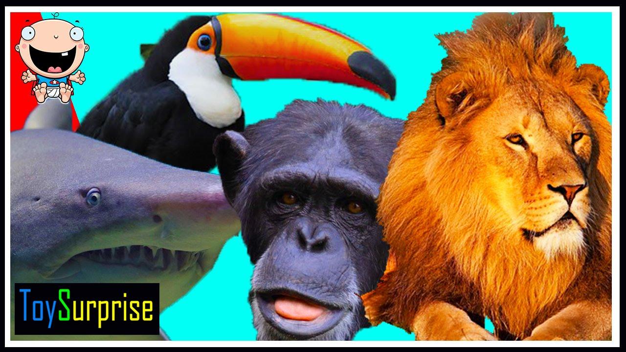 nombres y sonidos de animales salvajes para niños de infantil ...