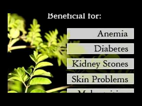 Day to day Health Benefits of Moringa the Multipurpose Tree