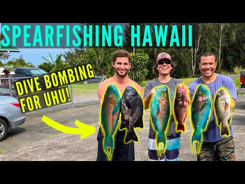 Spearfishing Hawaii Dive Bomb Uhu And Teaching New Spearo