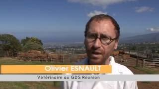 Qualité sanitaire du cheptel bovin, une priorité pour l'élevage