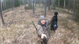 Grouse hunting: Охота на глухаря: На глухарином току...