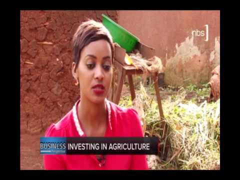 Business Perspective - Investment in Agriculture