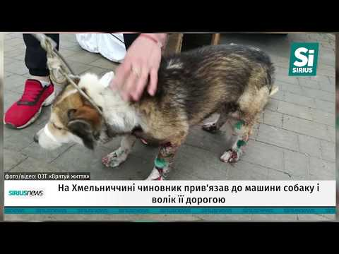 Чоловік прив'язав собаку до машини та протягнув дорогою