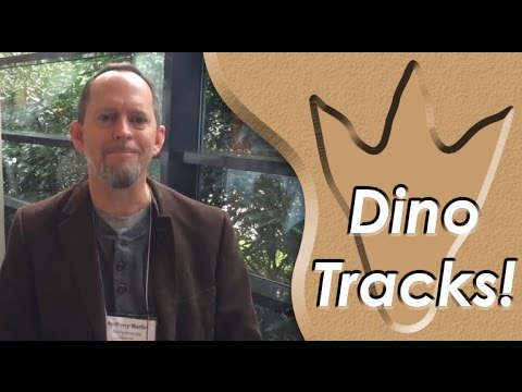 Ichnology: Dinosaur Footprints and Other Animal Traces from the Past