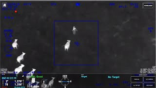 Cows help Florida police officers catch car theft suspect