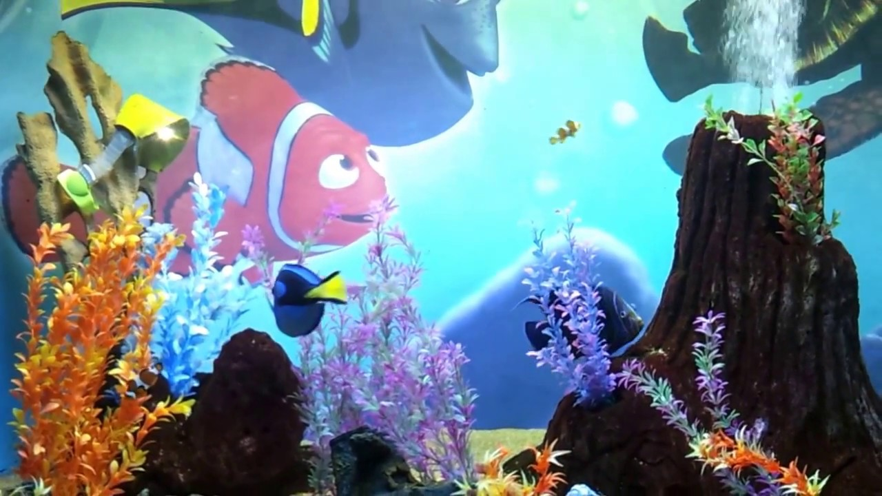 Fish in nemo aquarium - Finding Nemo Fish Tank