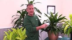 PLANTZ offers Janet Craig