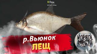 Русская рыбалка 4 Фарм серебра для новичков р Вьюнок Лещ рр4 троф лещь река вьюнок