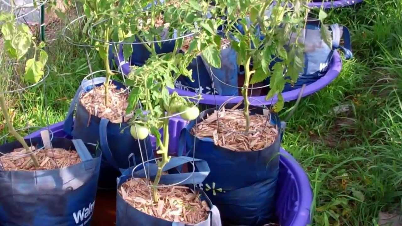 Update On The Kiddie Pool Grow Bag System! Looking Great!