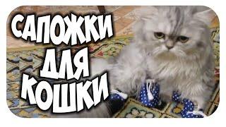 Сапожки для кошки