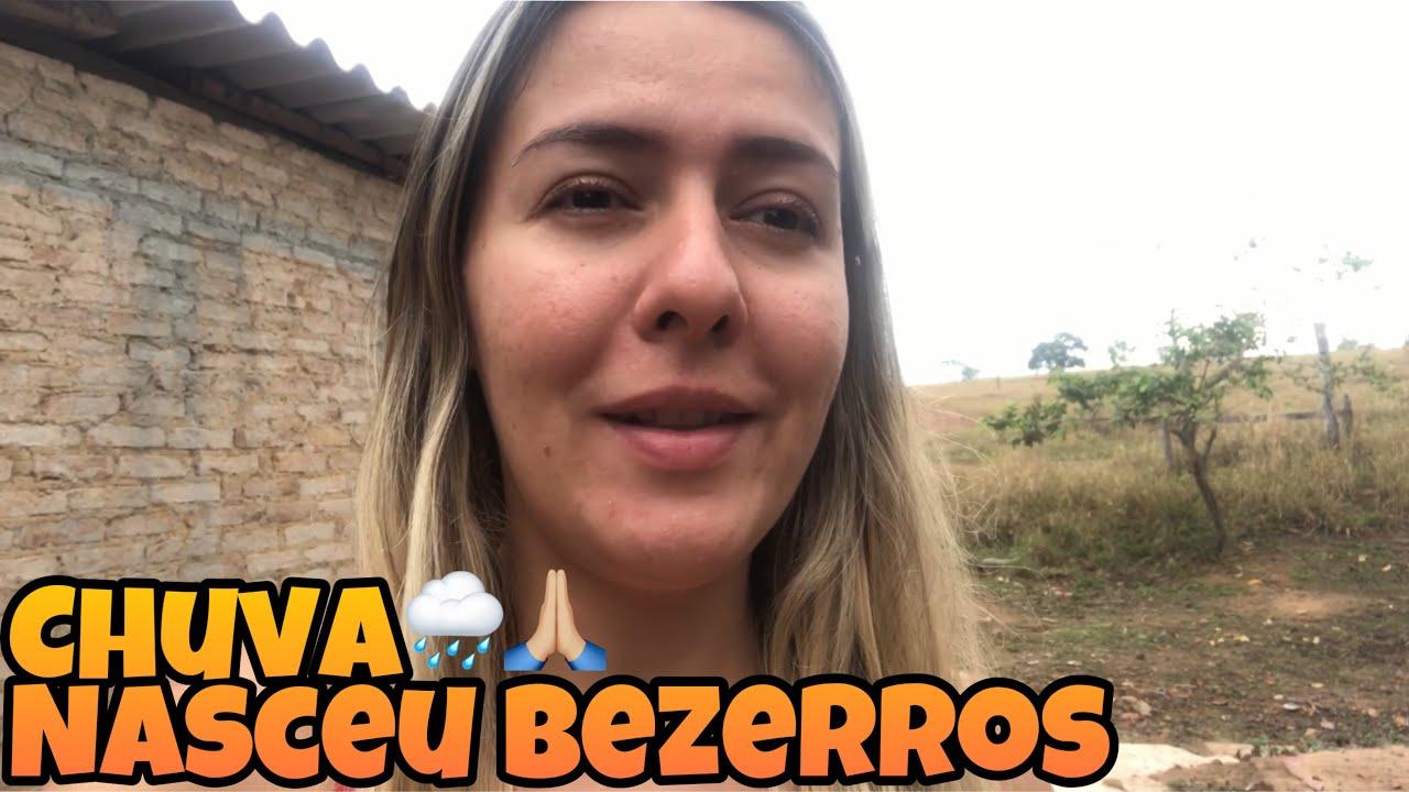 A CHUVA VOLTOU 🙏🏼 NASCEU 7 BEZERROS MACHOS SEGUIDOS DENTRO DE 1 MÊS - FUI PRO CURRAL