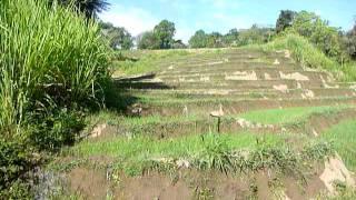 Sri Lanka,ශ්රී ලංකා,Ceylon,Beautiful Rice Paddy Terraces (03)