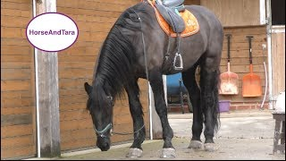 Riding A Friesian Horse for th…