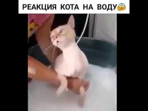 Реакция кота на воду