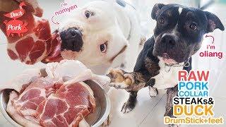 pit bulls eat Raw pork collar steak combo (+duckfeet & duck drumsti...