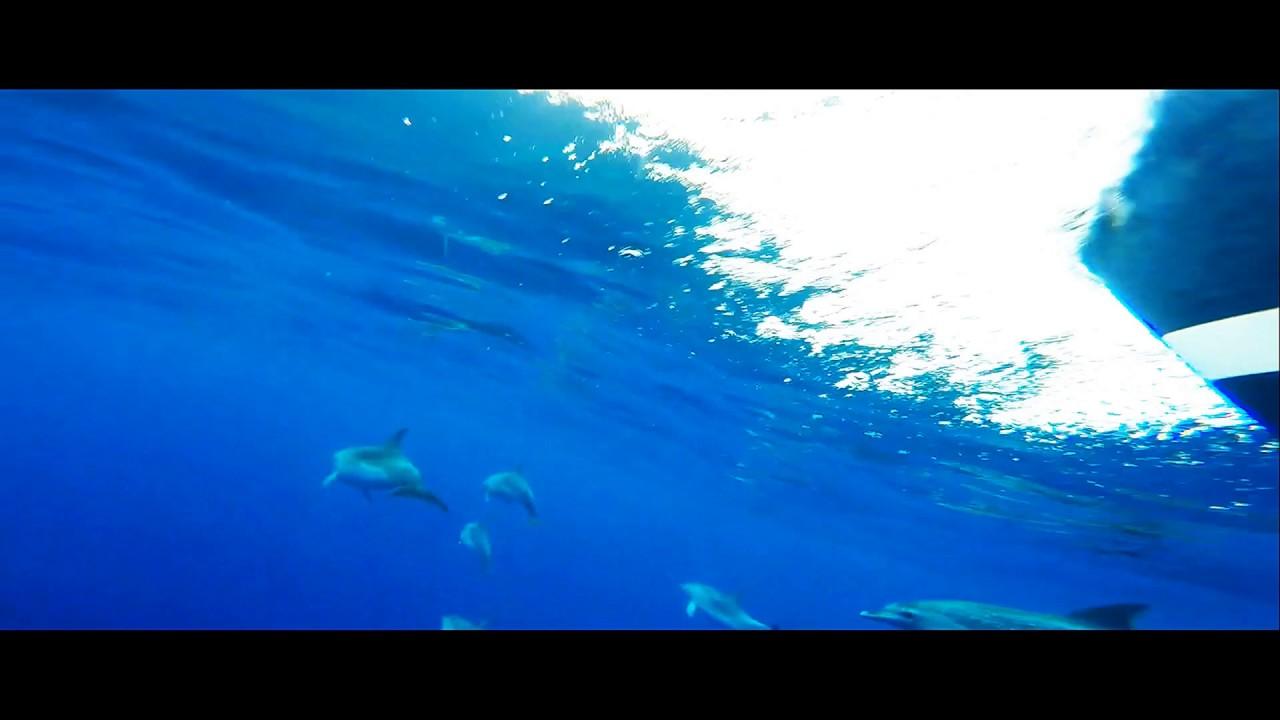 Atlantic Ocean | Dolphins | underwater footage.