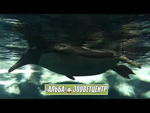 Ради общения с животными мы готовы ехать хоть в Боярку хоть на Канары
