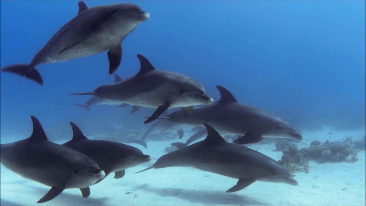 Saint-Saëns - The Carnival of the Animals - VII. Aquarium ...