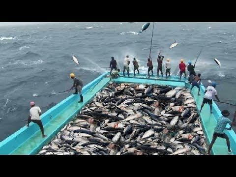 Amazing Fast Tuna Fishing Skill, Catching Fish Big  on The Sea
