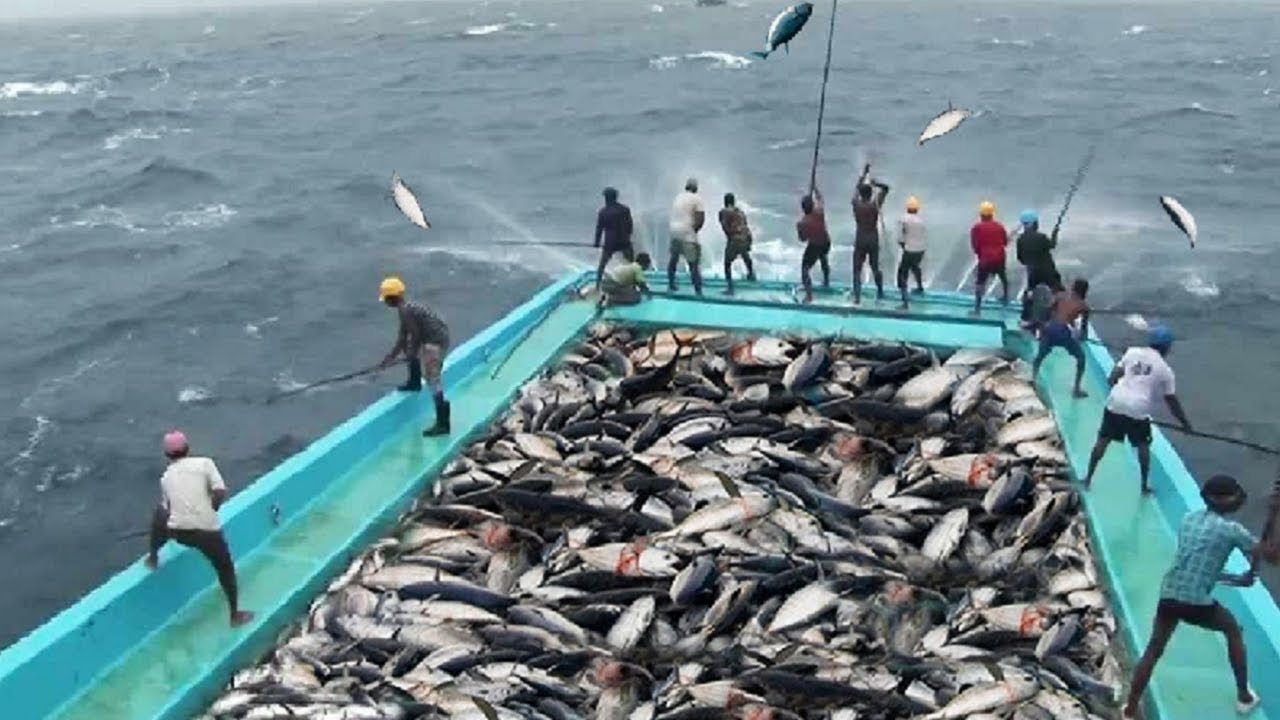 Amazing Fast Tuna Fishing Skill Catching Fish Big On The Sea Youtube