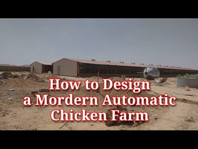How To Design a Modern Automatic Chicken Farm I Layers Chicken Farming I Poultry House Design