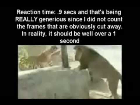 Tiger vs lion Intelligence. A tigers much more intelligent and cunning then a lion
